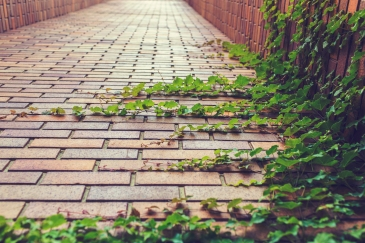 A red brick path disappearing under long green tendrils of a vine slowly overtaking the path.